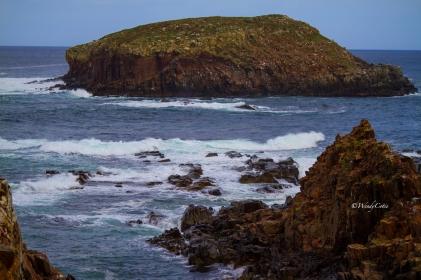 Puffin Island #2