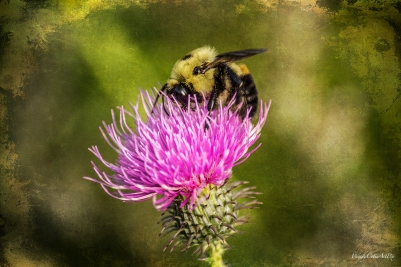 img_0339_beethistle