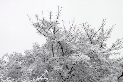 img_0722_snowtree
