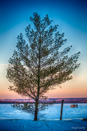 img_1674_day11_365_tree
