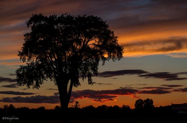 img_2109_summersunset_tree