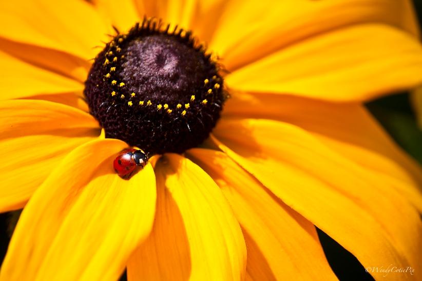 img_2456_ladybugsusan