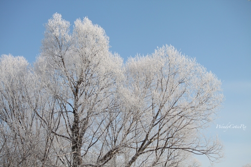 img_3013_hoarfrostedtrees