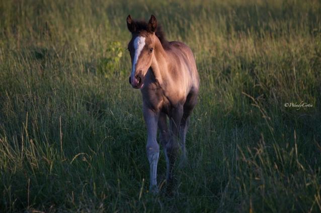 Stormy's foal