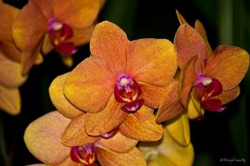 img_3326_beautifulorchid