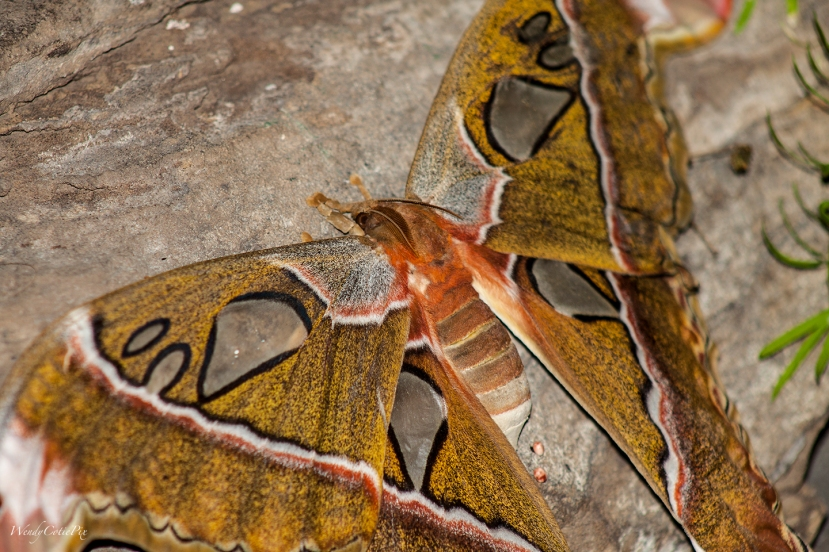 img_3383_giantmothhead