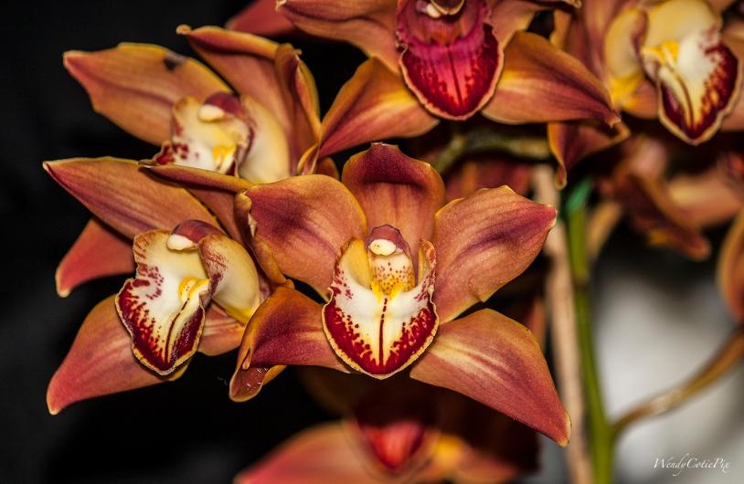 img_3594_bigorangecrazyorchids