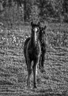 img_3868_brothercolts5x7gs