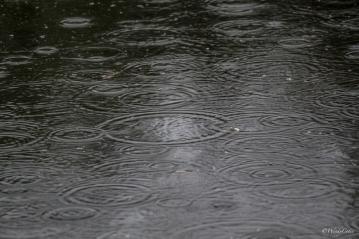 IMG_4990_Rain_LR