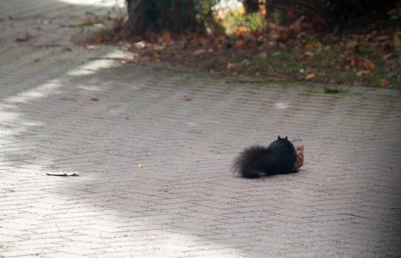 img_5414_autumnsquirrel