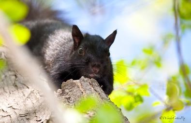 img_5415_squirrelcloseup