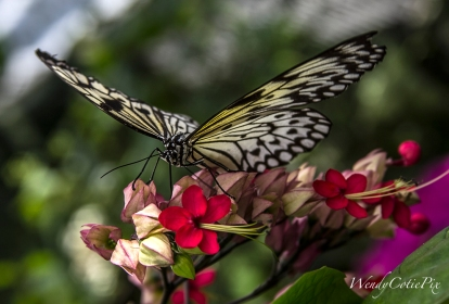 img_5740_yellowblackbutterfly