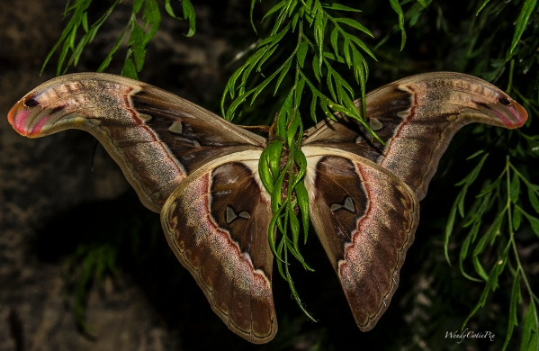 img_5856_giantmothbackholdingplant