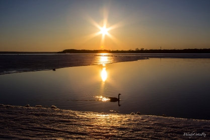 img_6369_sunsetgoosesilouette