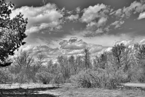 DramaClouds, Shirley's Bay, ON B&W