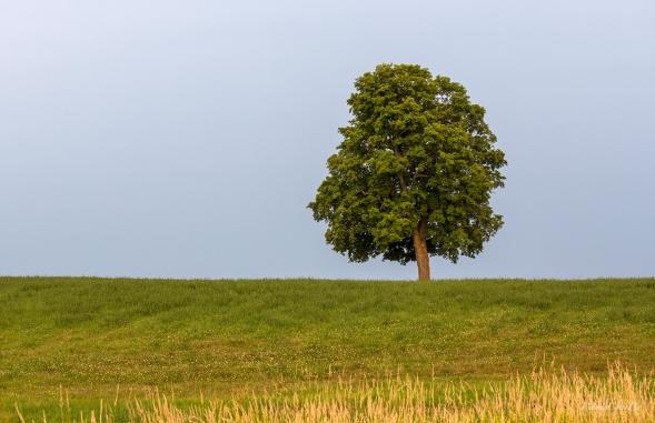 img_7272_tree