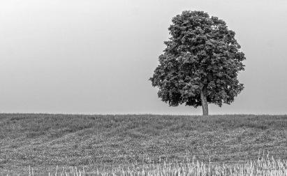 img_7272_tree_hrd_gs