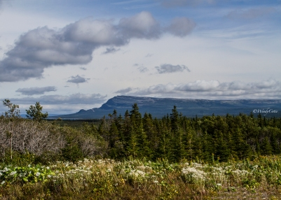 Along the Viking Trail