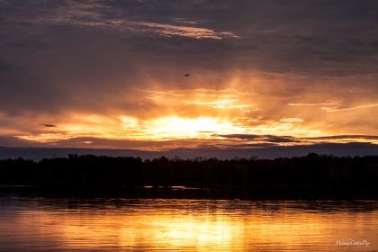 img_8195_sunsetseagull