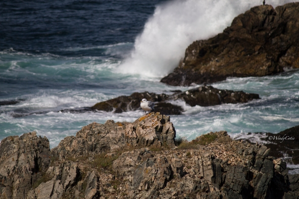img_9191_seagullwaves