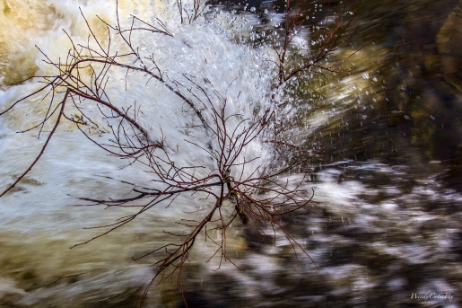 img_9585_crashingwaterlittletree