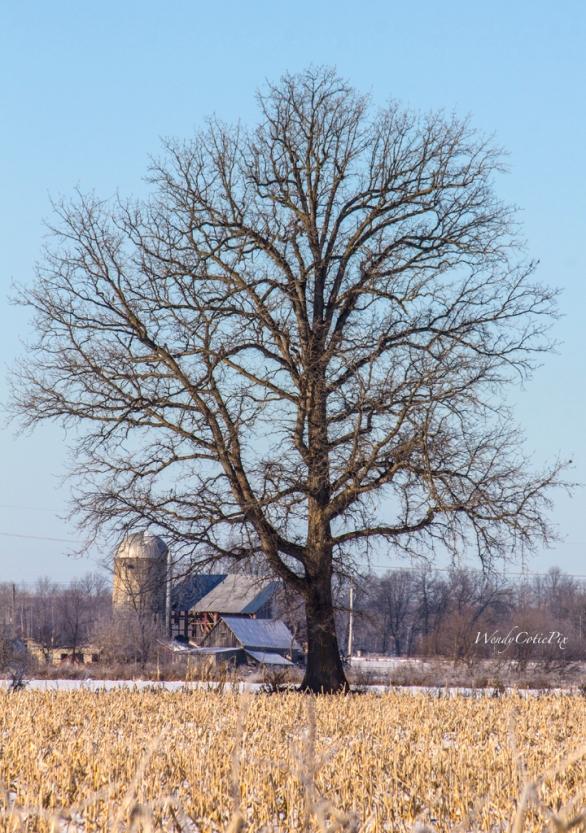 _mg_3594_treefarm