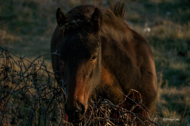 img_0444_brownfilly