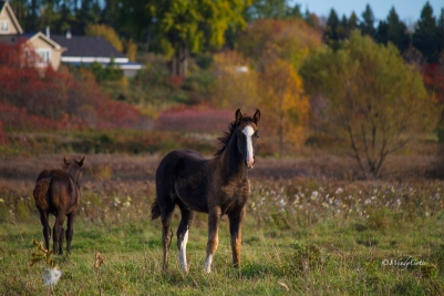 img_3836_foalscolts