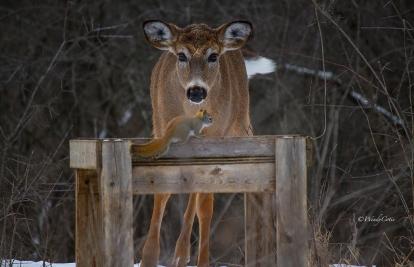 img_4732_deersquirrelheaddown