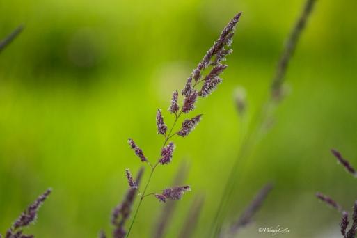 img_7758_summergrass